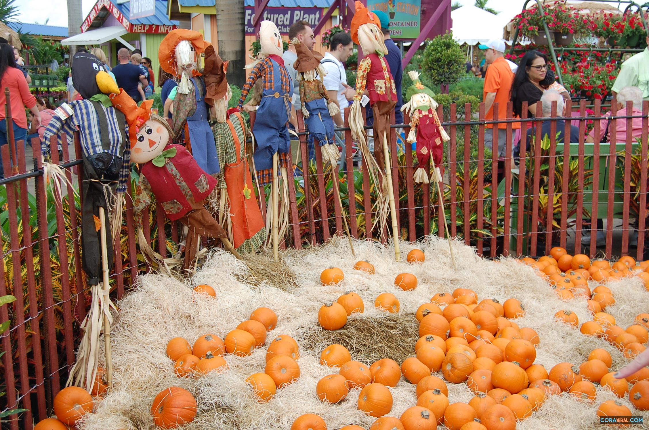 We All Love To Take Our Kids Pumpkin Patch A Million Pictures And Just Be For Day If You Live In Broward Area Flamingo Road Nursery Is