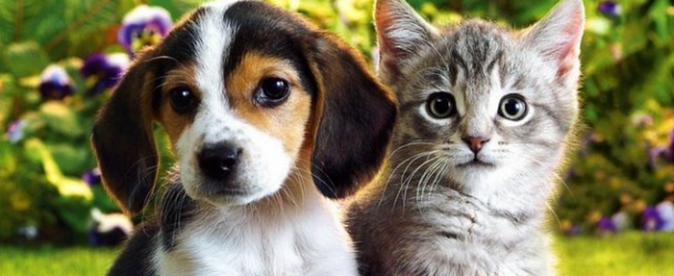 Article About Dog And Cat Who Travel Together