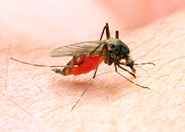 healthy-people-2020-malaria