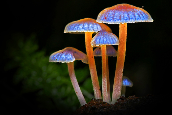 bioluminescent plants and fungi relationship
